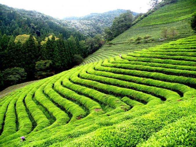 popular places to visit in Coorg